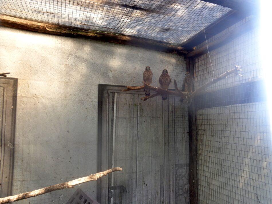 Дикие птицы преподнесли биологам сюрприз в Тверской области
