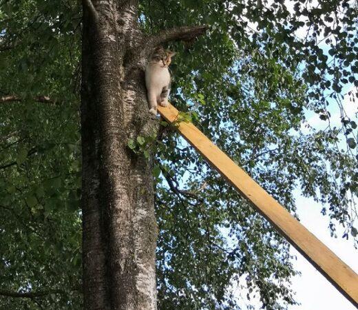 В Твери прохожие провели спасательную операцию, чтобы снять кошку с дерева