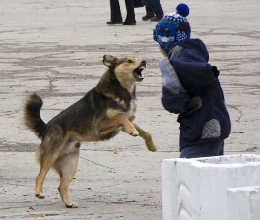 В Тверской области бродячая собака напала на 4-летнюю девочку