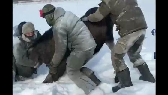 В Твери обвиняемых в  убийстве лосихи  освободили из-под домашнего ареста  в зале суда